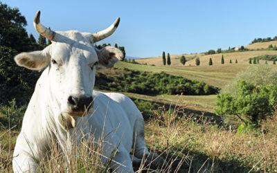 Progetto Meat & Value – Relazione generale finale